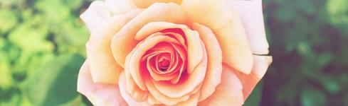 ボタニカル バラ