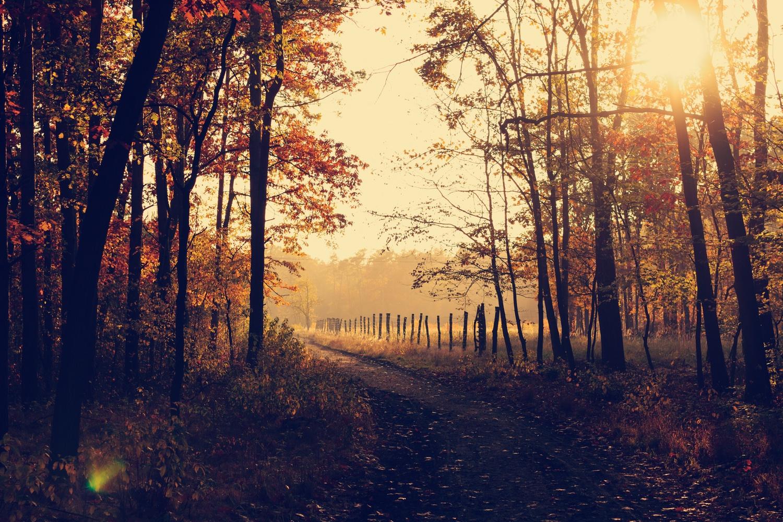 秋のジュエリー